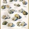 Branding Opportunities for Oyster Farmers: A Free Webinar