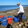 Restoration of oyster reefs to enhance Oystercatcher habitat in Cedar Key