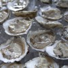 Marketing Cultured Oysters Workshops: May 6-7