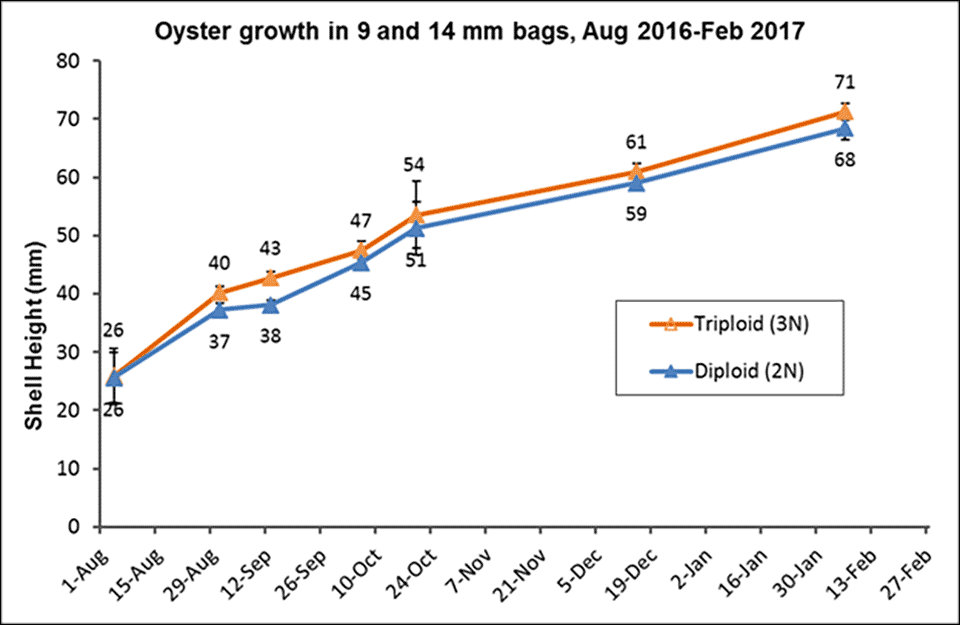 Oyster growth graph