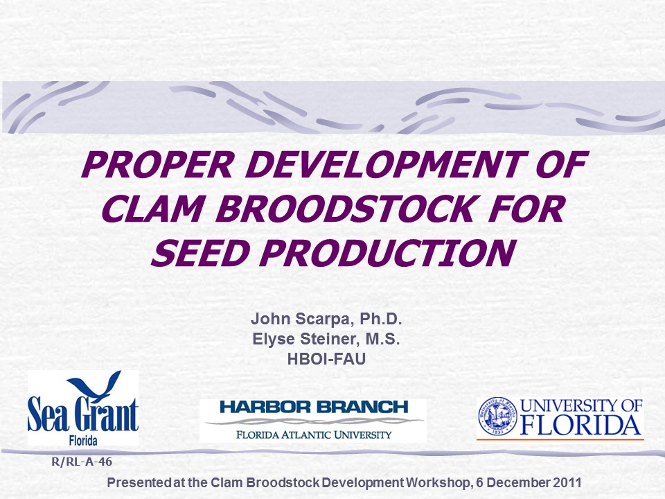 Proper Development of Clam Broodstock for Seed Production PICTURE