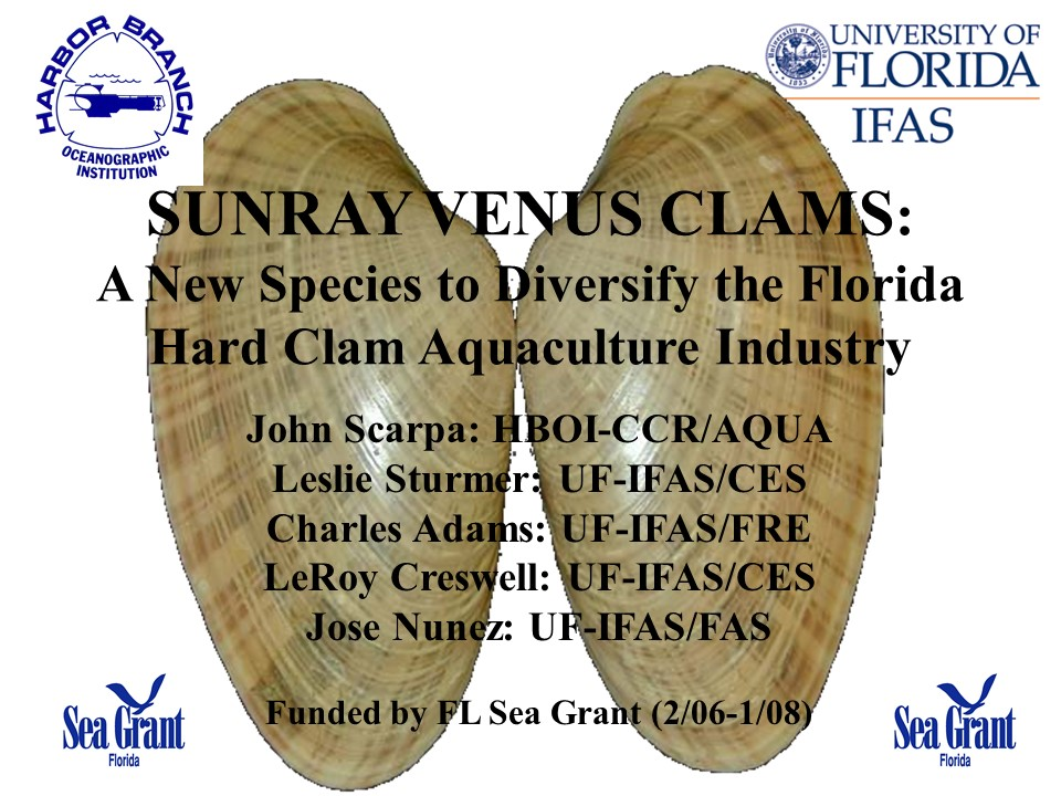 Sunray Venus Clams: New Species to Diversify the Florida Hard Clam Aquaculture Industry PICTURE