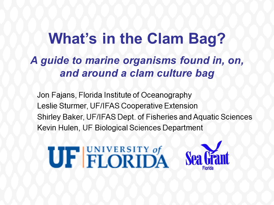 What's in the Clam Bag? PICTURE