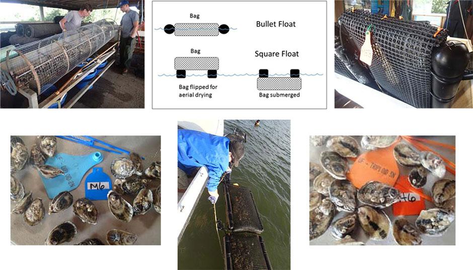 Oyster photos