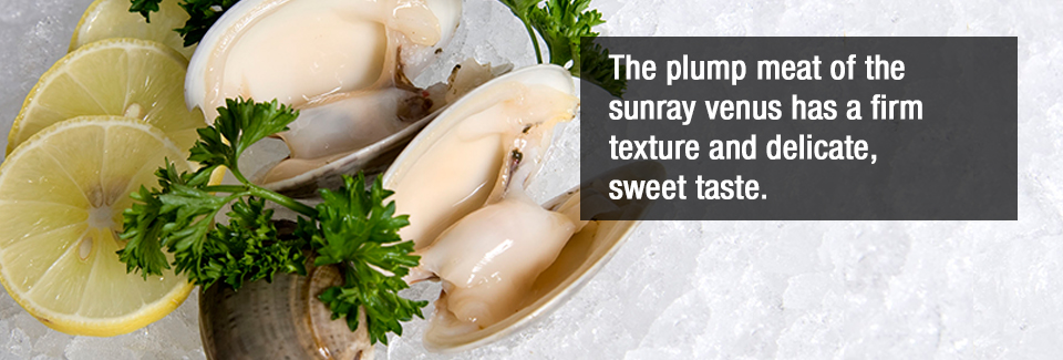 The plump meat of the sunray venus has a firm texture and delicate, sweet taste.