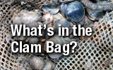 What's in the Clam Bag