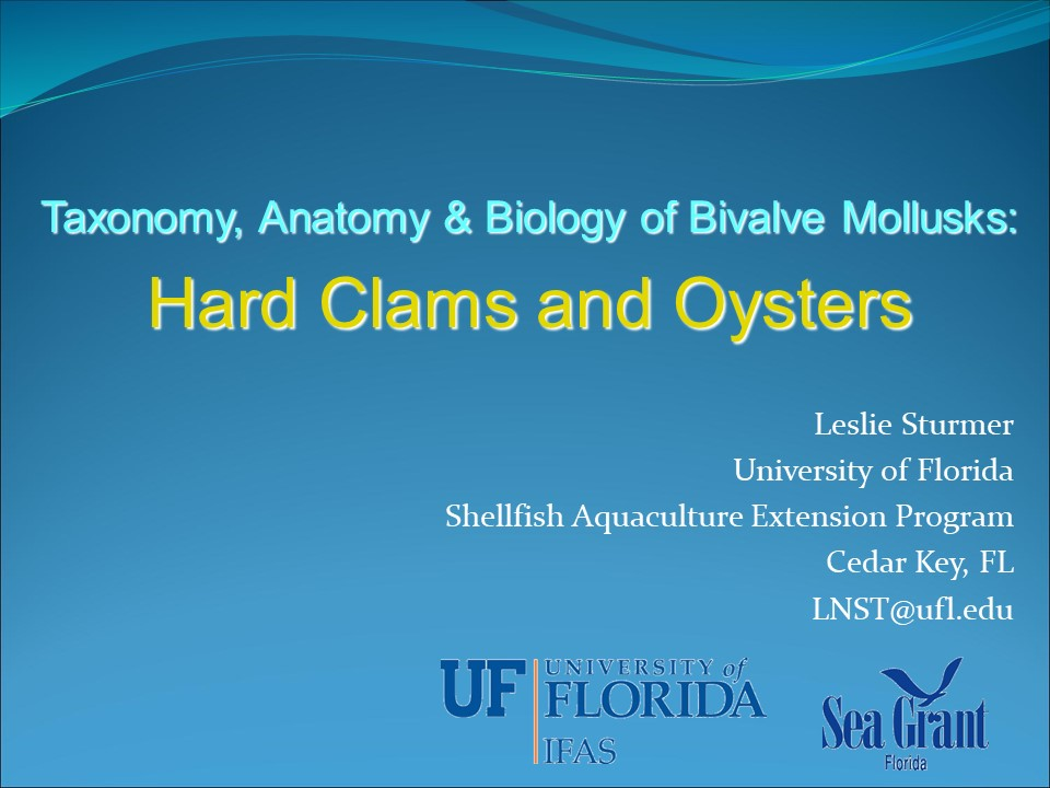 Biology and Anatomy of the Hard Clam PICTURE