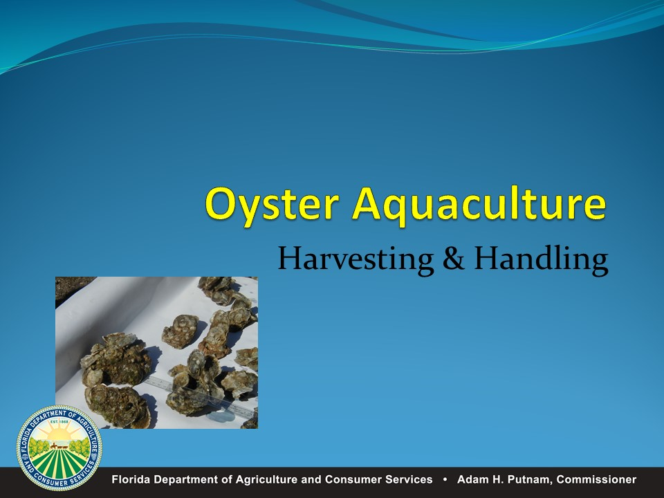 Harvesting and Processing Requirements for Oysters during Summer Months PICTURE